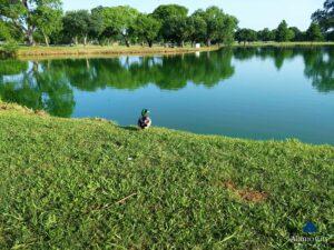 Riverside Mallard Duck